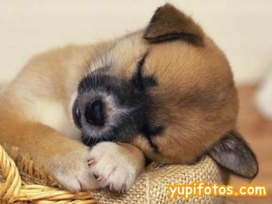 ¿Por qué acaricio a mi perrito Pancho? Sobre la vocación y la afectividad